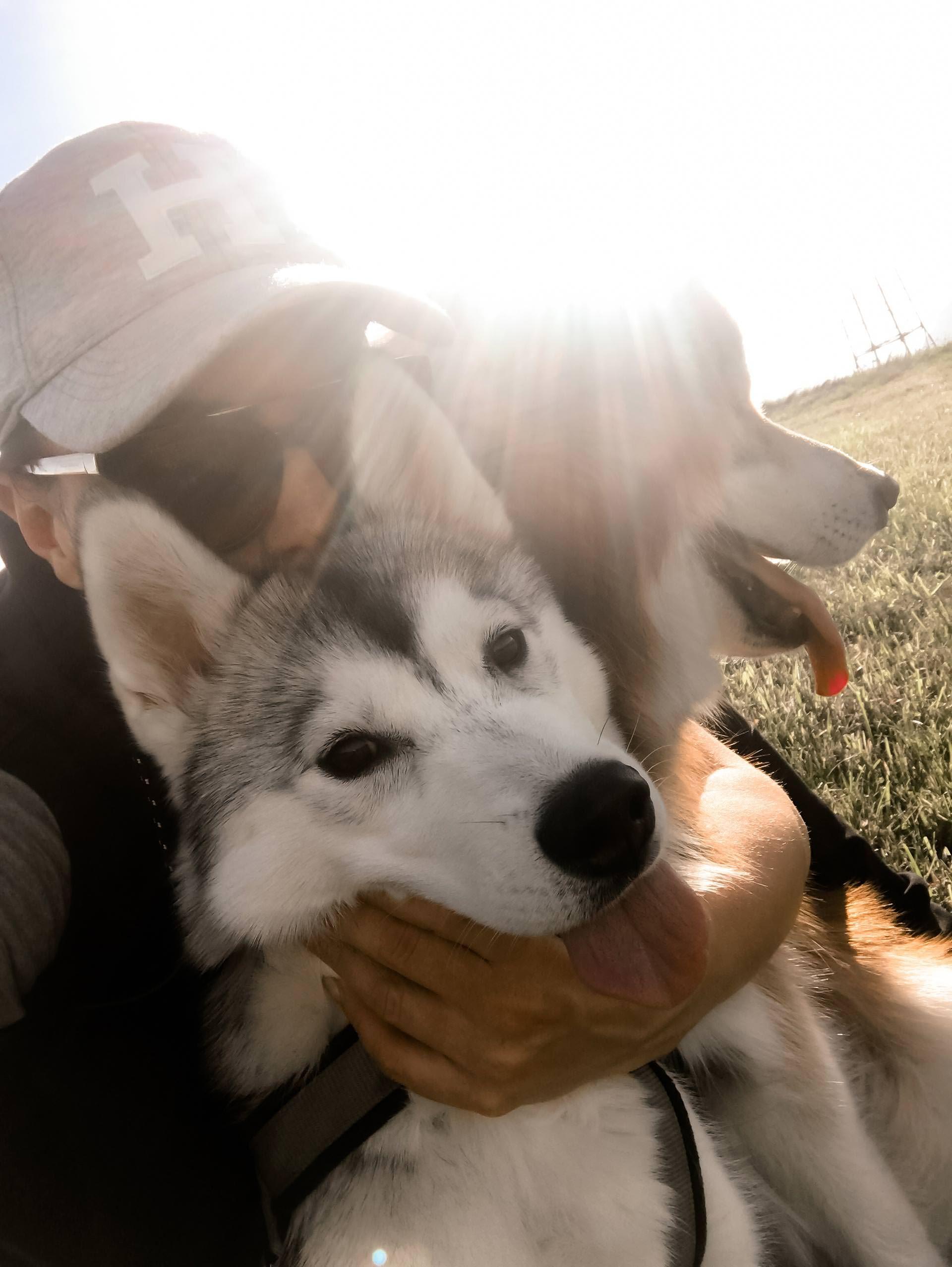 Unser Alltag Mit Hund 4 Uber Bgh1 Prufungen Und Laufige Hundinnen The Pawsome Tyroleans Hunde Husky Hund Sibirischer Husky