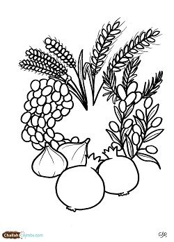 Tu B'shevat Coloring Pages : b'shevat, coloring, pages, ChallahCrumbs, Downloadable, B'Shvat, Coloring, Sheets, Jewish, Crafts,, Shavuot