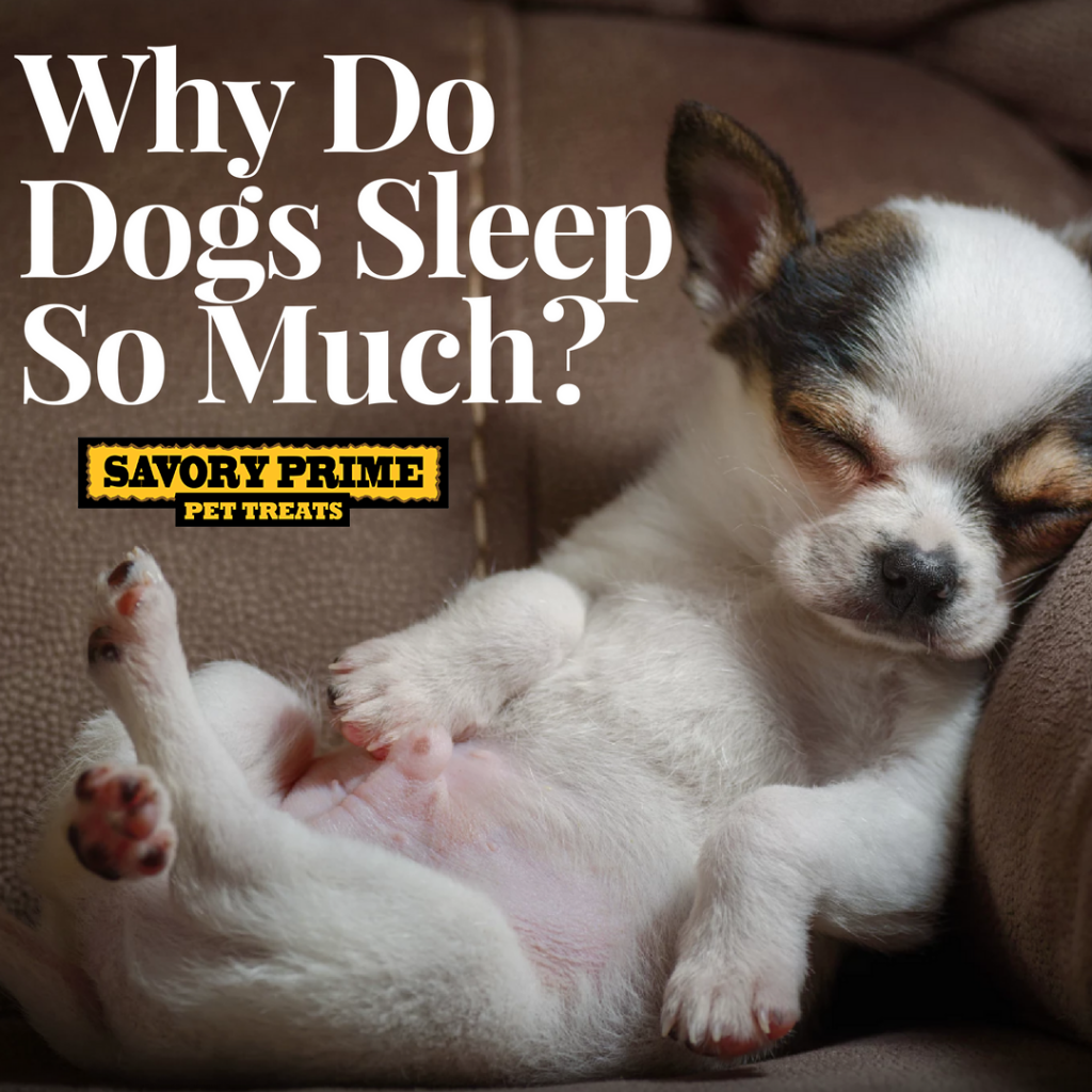 Does Your Dog Spend A Good Deal Of The Day With His Head On A Pillow Thought So While It May Seem Excessive Sleeping For Long P Sleeping Dogs Dog Deals