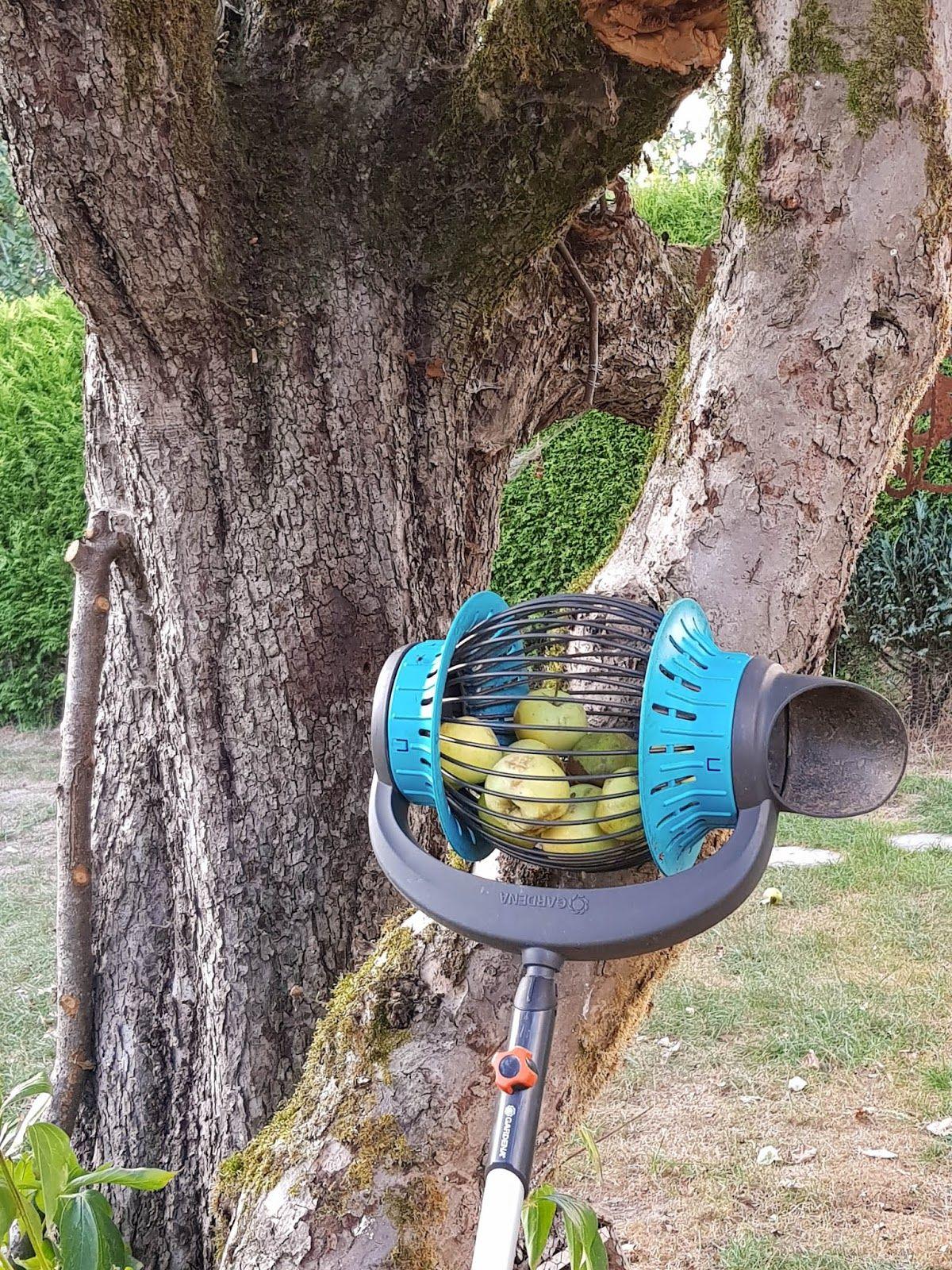 tipp zum Äpfel sammeln leicht gemacht mit dem rollsammler