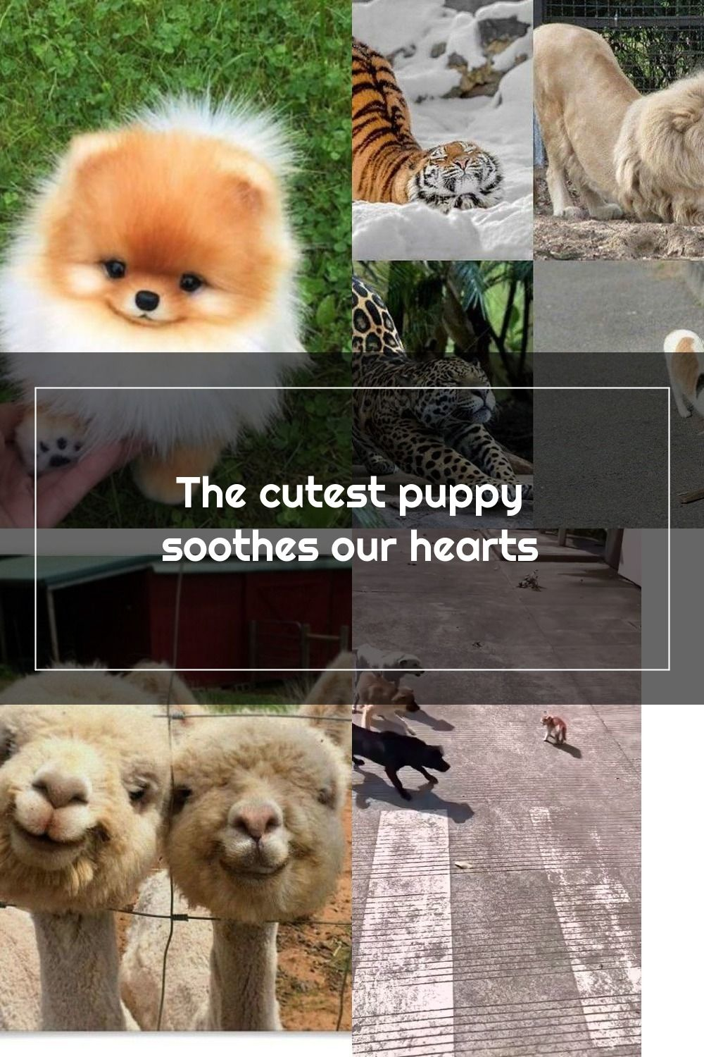 Pin On Cute Baby Animals
