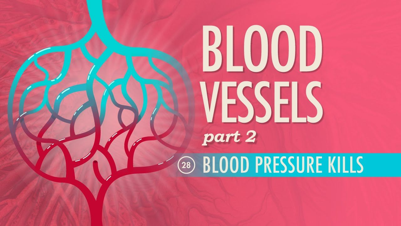 Blood Vessels, part 2 | Blood vessels, Anatomy and Phlebotomy