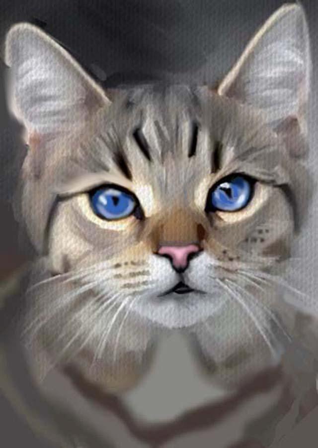Gorgeous Blue Eyed Cat Cats Illustration Animal Art