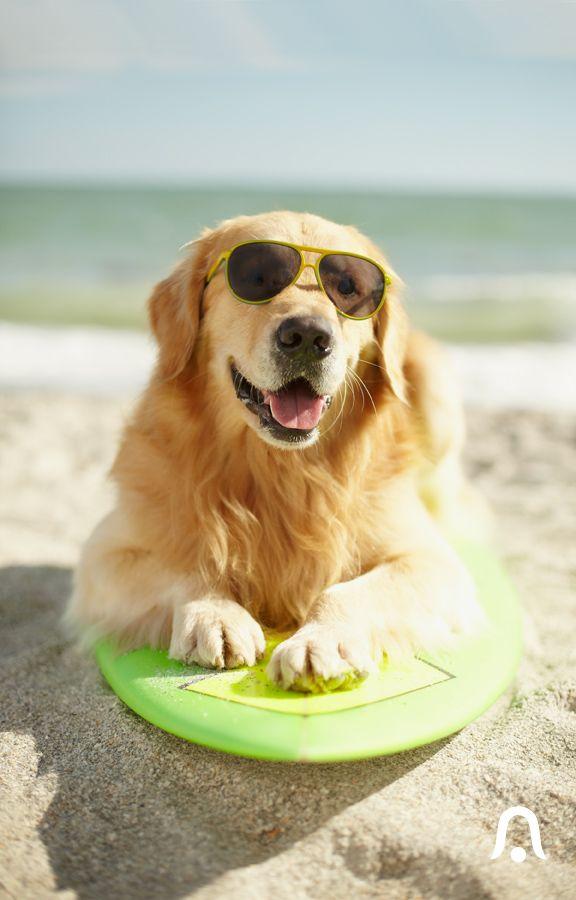 Bealls Florida Department Stores Beachwear Home Clothing Dog Friendly Beach Golden Retriever Dog Friends