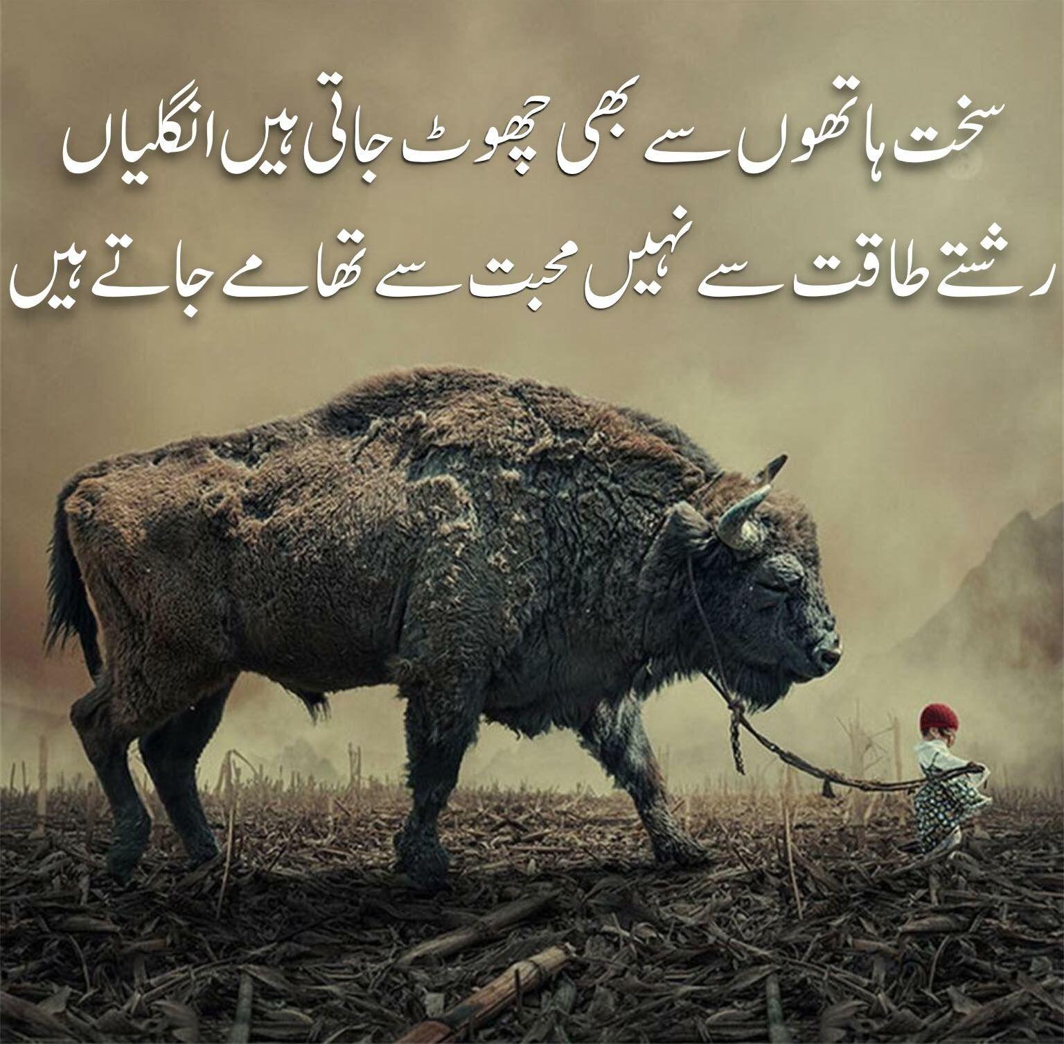 Quotes For Life Urdu Funny Poetry Best Urdu Poetry Images Nice Poetry