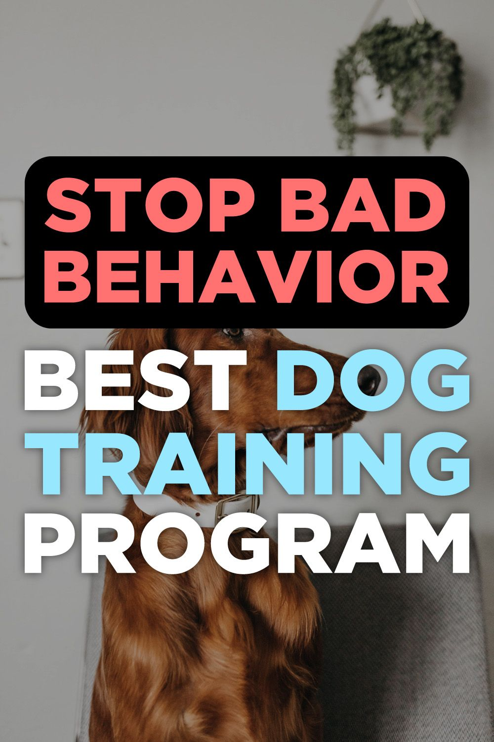Brain training for dogs review puppy training biting