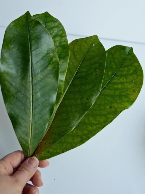 Photo of How to Make a Fresh Magnolia Wreath