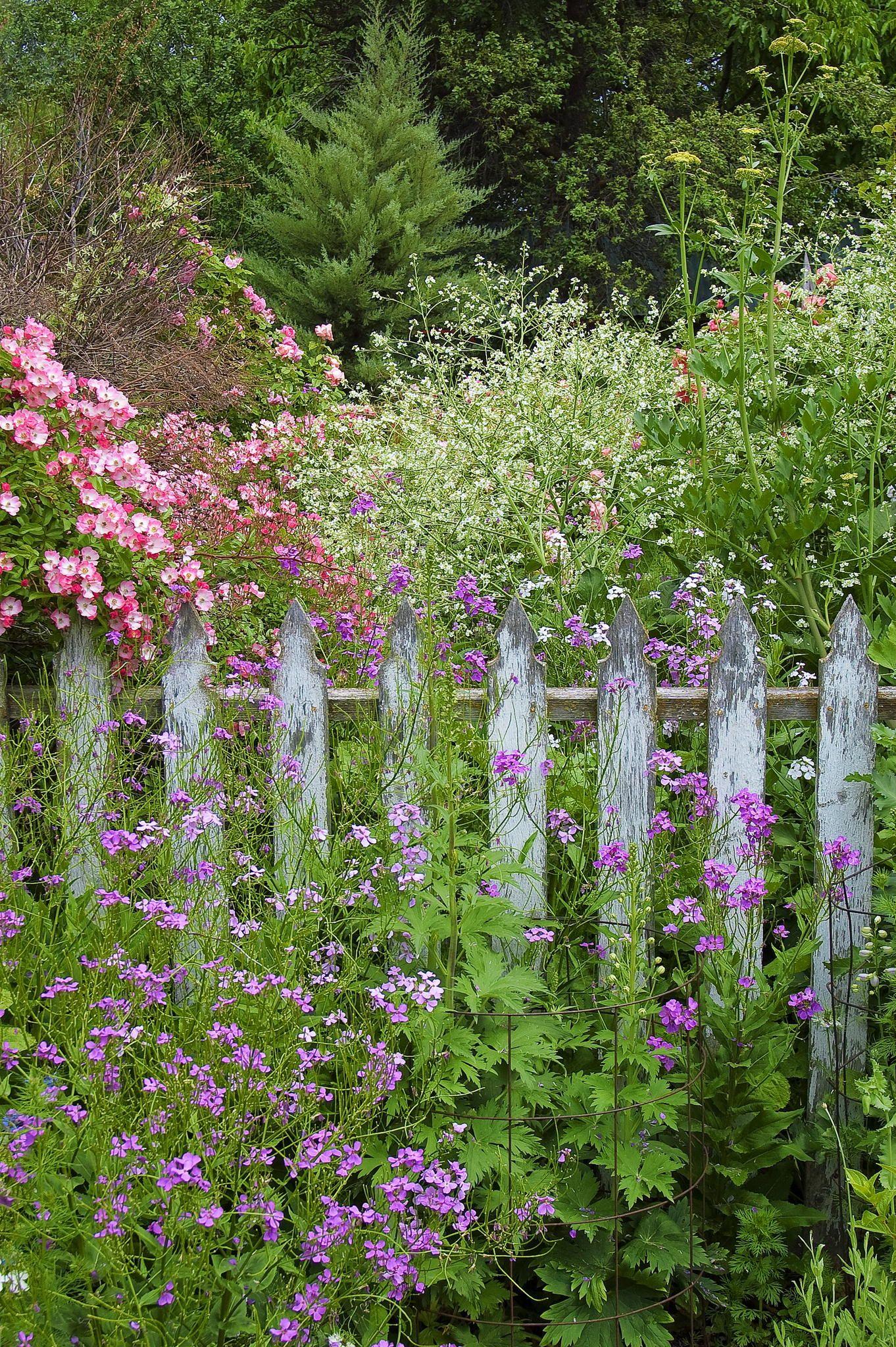 Sharon\'s Garden by Shauna Sprunger on 500px | záhrada | Pinterest ...