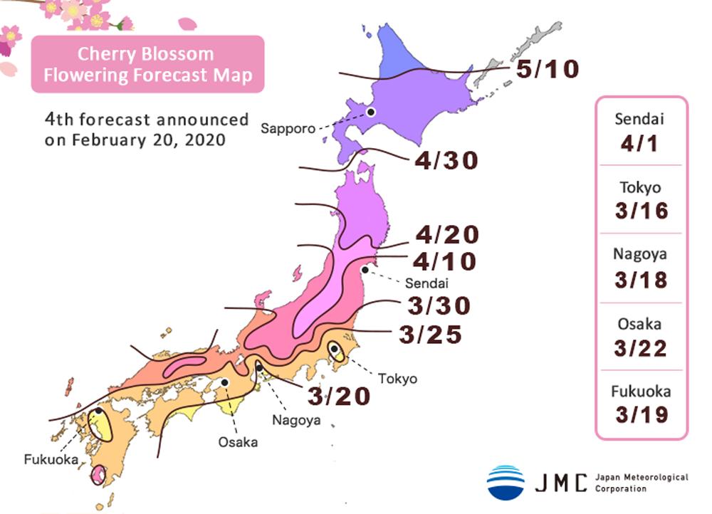 Kyoto Cherry Blossom Guide Sakura Season Viewing Tips Travel Caffeine Cherry Blossom Japan Cherry Blossom Sakura Cherry Blossom
