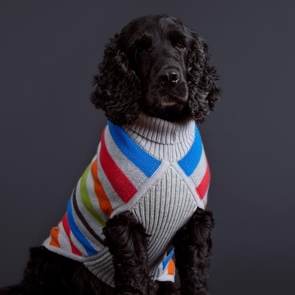 The Puppy Soft Myrtle Dog Sweater Is Knitted To Our Own Breed