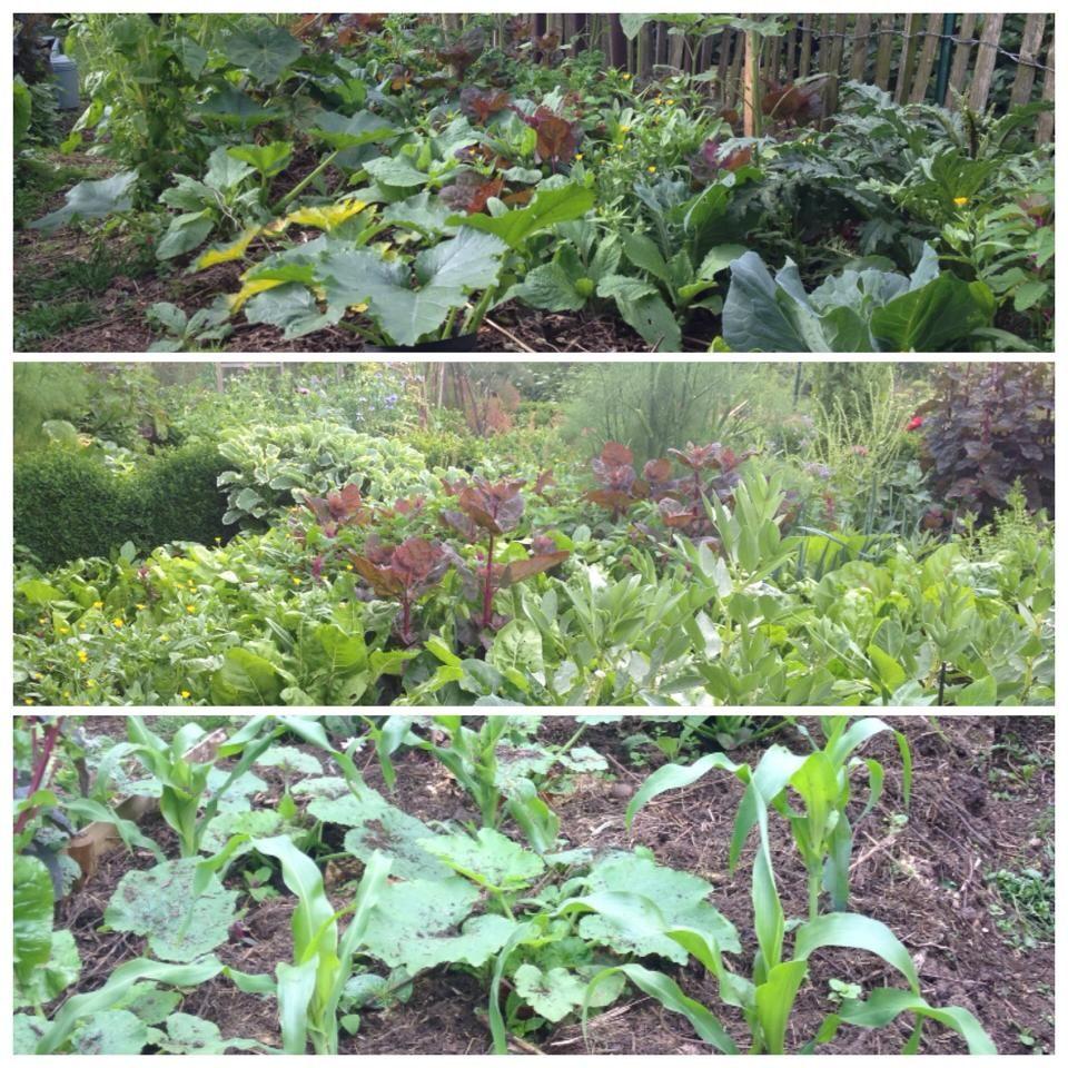 Pourquoi j 39 arr te la permaculture jardin et permaculture - La permaculture c est quoi ...
