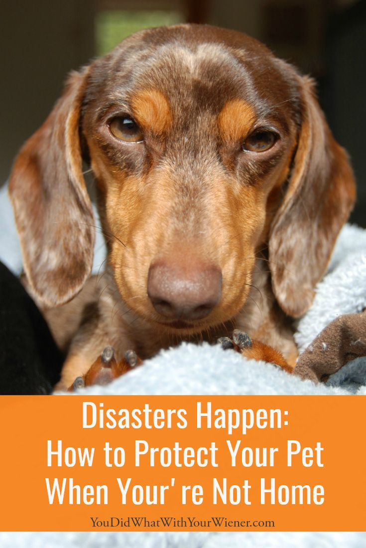 Disaster Happens How To Protect Your Pet When You Re Not Home