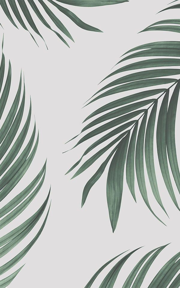 Tropical Palm Leaves Wallpaper Mural | MuralsWallpaper