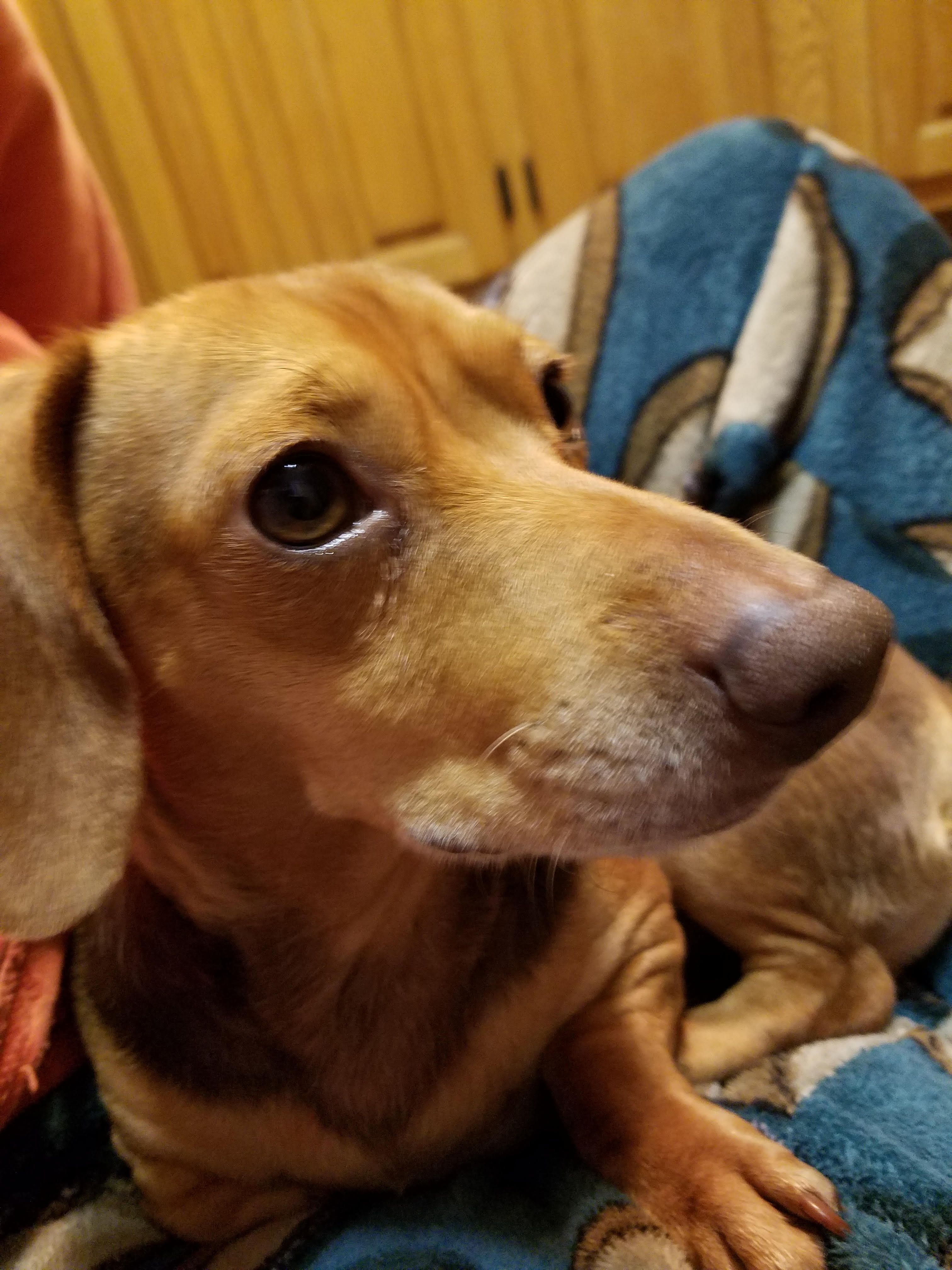 Meet Alvin In Vt An Adoptable Pet Dog Dogs Pet Dogs Animal