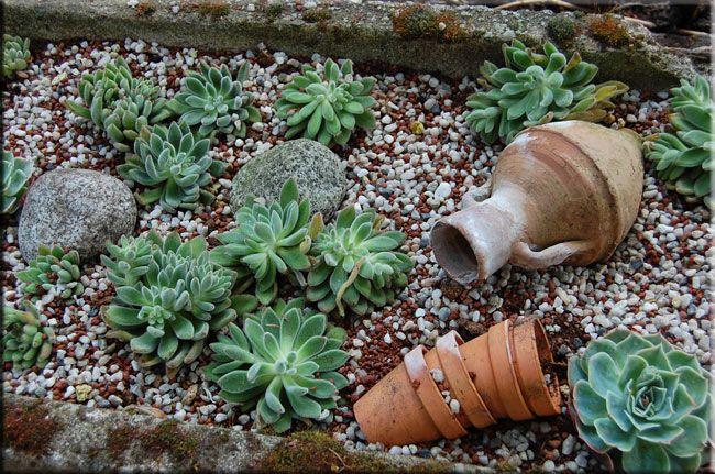 succulenten soorten - Google zoeken