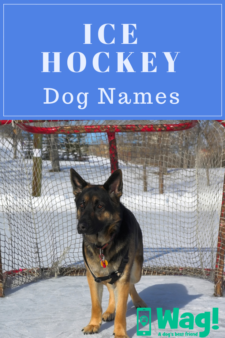 Ice Hockey Inspired Dog Names Wag Dog Names Boy Dog Names Puppy Names