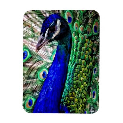 PEACOCK PHOTO MAGNET
