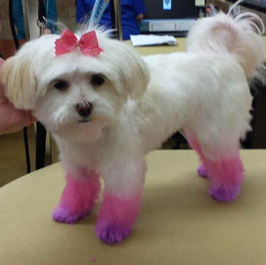 The Ombre Trend Is So Hot Right Now Even Pups Ask For It At The Salon Petexpressions Photo Credit Petsmart2426 Pamper Pets Dog Grooming Pets