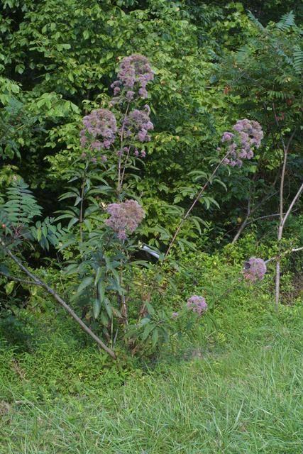 Plants Database - Garden.org