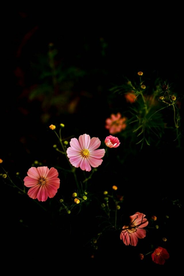 Sweet Colour Flowers Photography Wallpaper Beautiful Flowers Wallpapers Flowers Photography