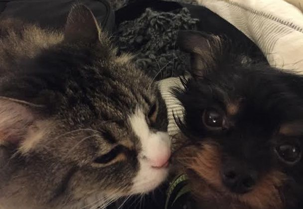 Eleanor (kitty) and Rigby (pup) from April 2015