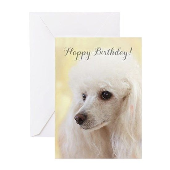 Single White Poodle Birthday Card Gift//Present dog Greeting