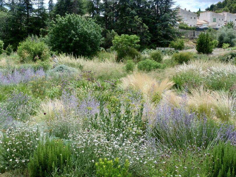 Plantas para clima mediterr neo y jardines naturalistas for Plantas jardin mediterraneo