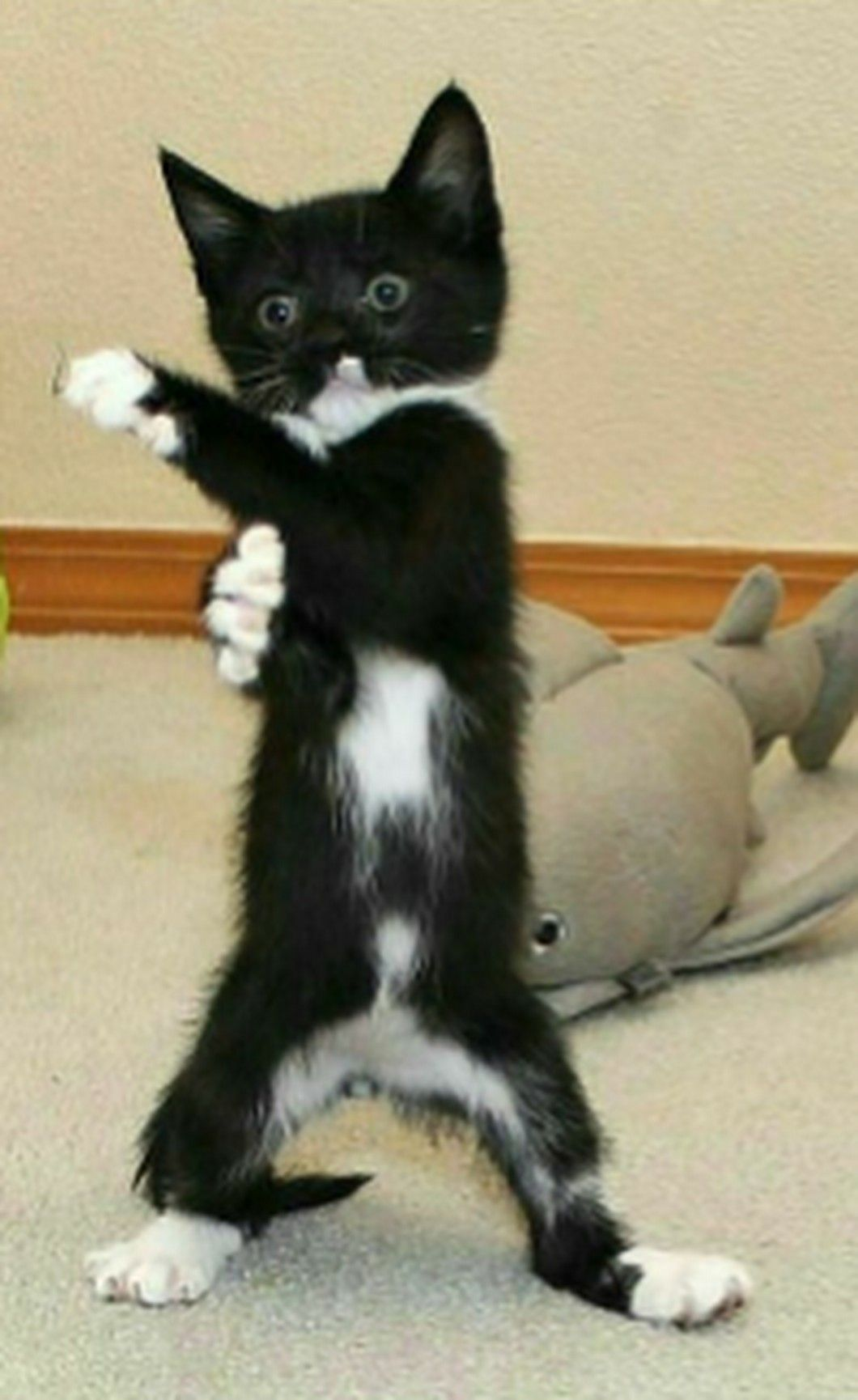 Everybody Was Kung Fu Fighting With Images In 2020 Cats Cute Cats And Kittens Kittens Cutest