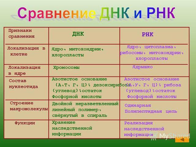 Порівняння днк і рнк