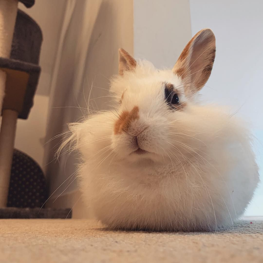 8 Things you do that upsets your bunny – shopbunnies.com   Rabbit ...