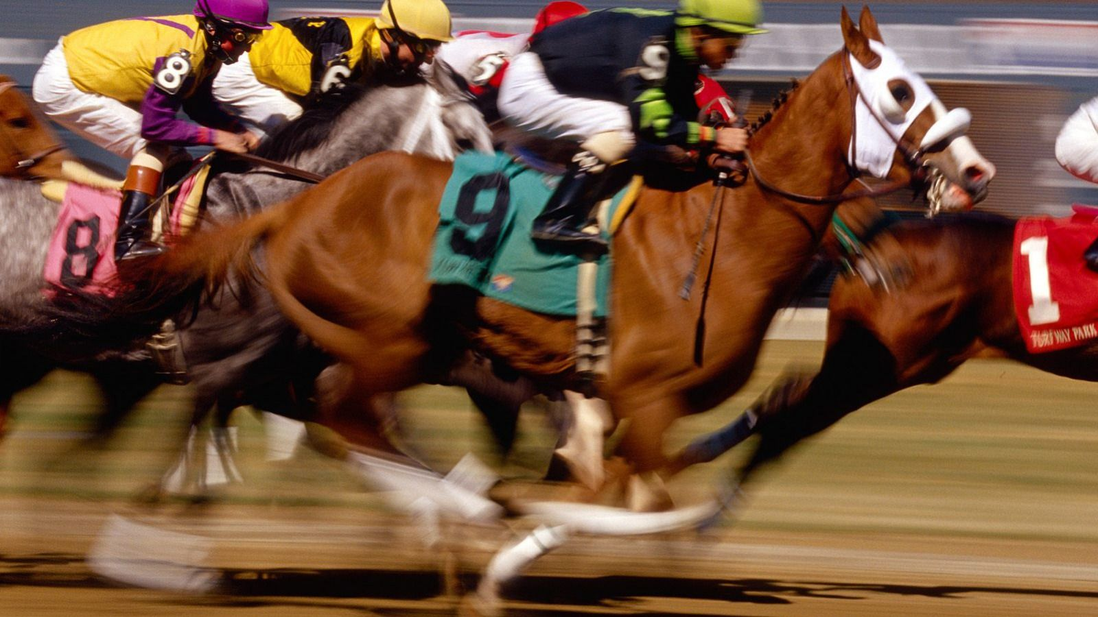Thoroughbred Horse Racing Turfway Park, Kentucky Équestre