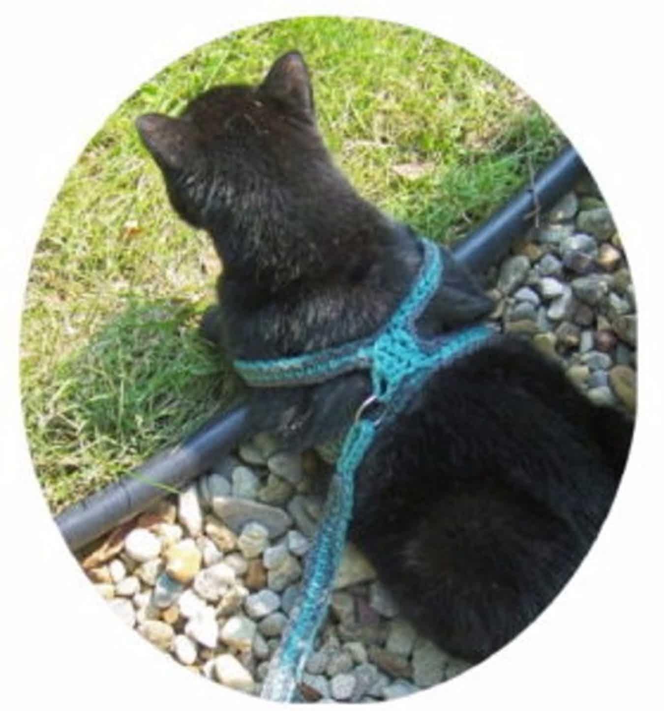 Crochet A Cat Harness Leash Craftbits Com Cat Harness Cat Hammock Pattern Crochet Cat