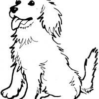 Golden Retriever Coloring Sheets Pinterest Printable coloring