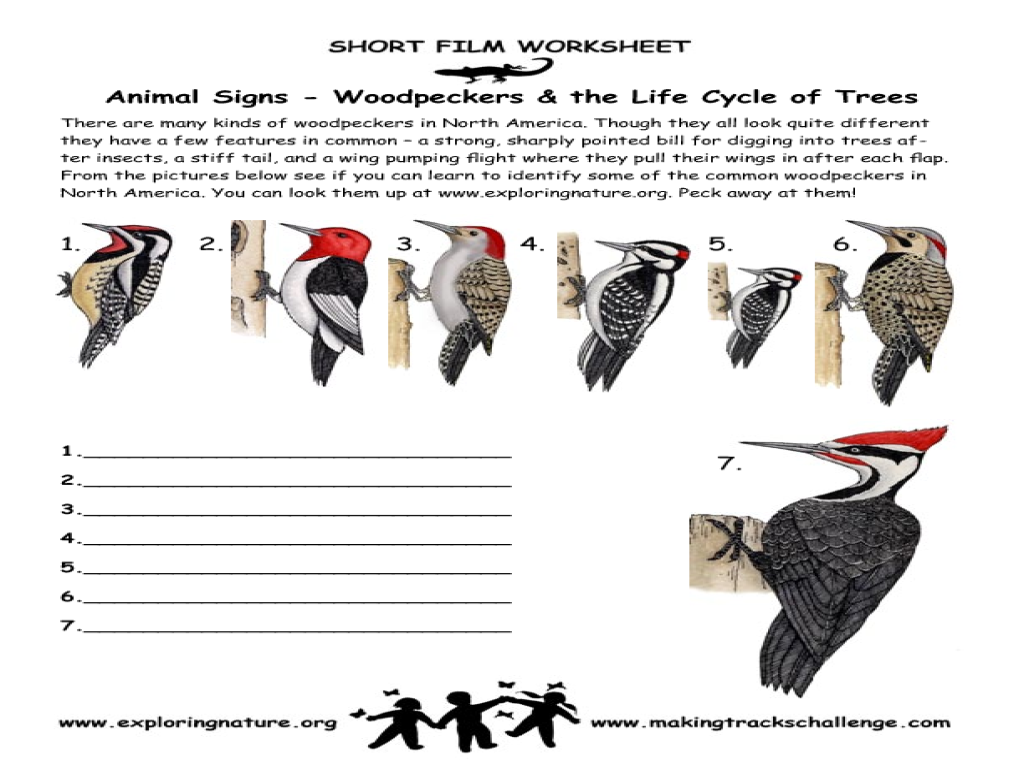 Woodpecker Lesson Plans