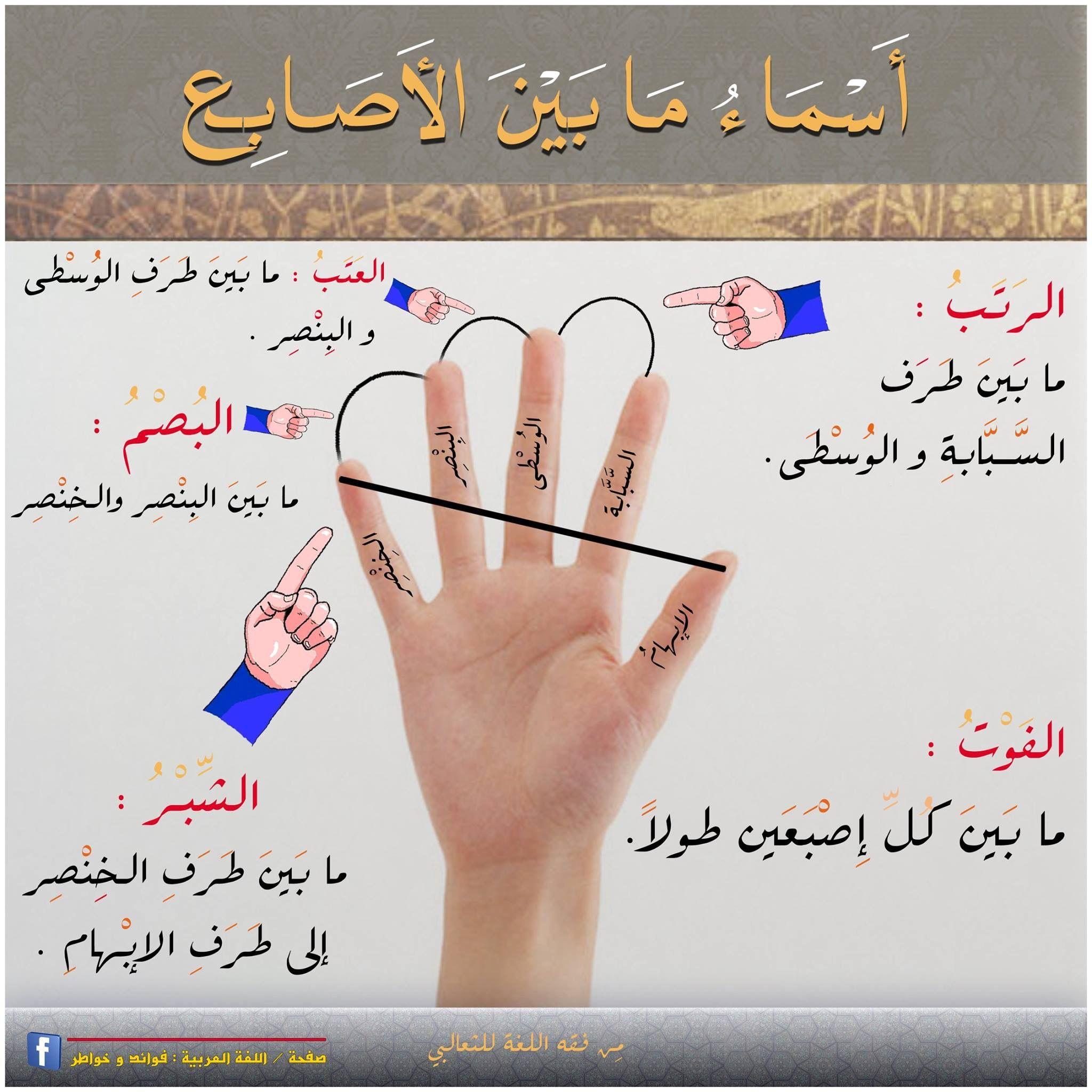 اسماء ما بين الأصابع Arabic Langauge Arabic Language Learn Arabic Alphabet