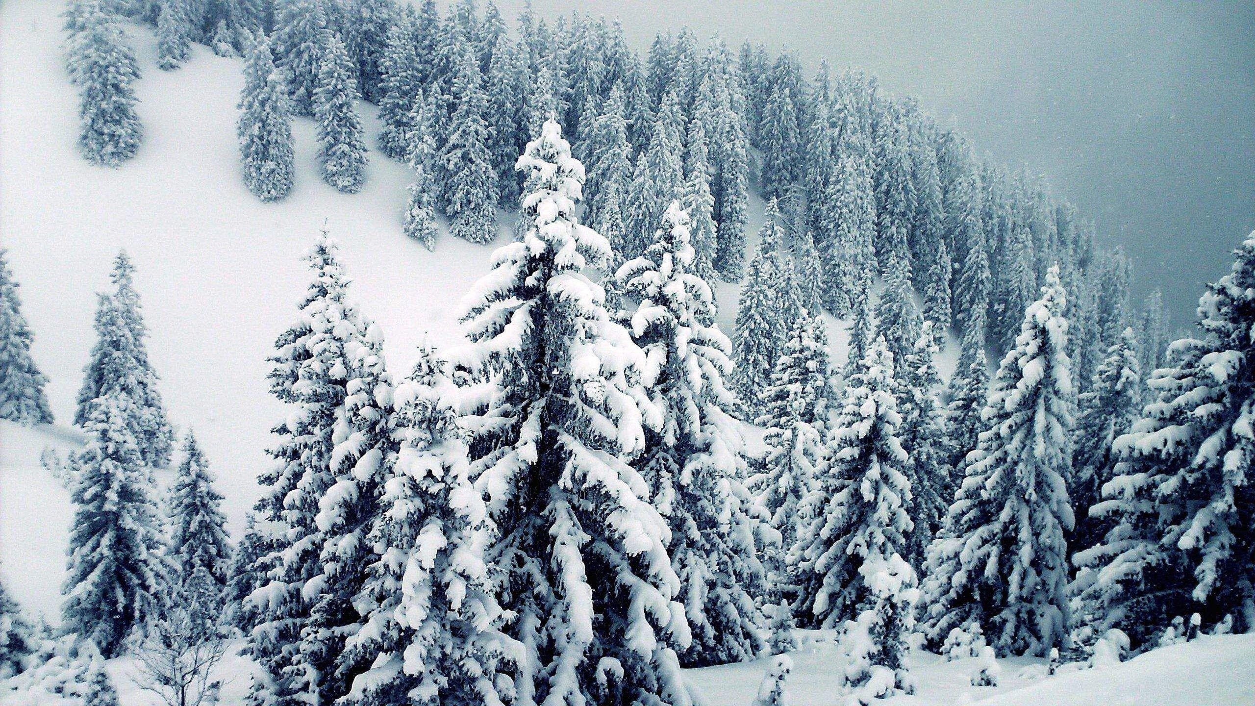 Snow Winter Trees Wallpaper Wallpaper Download Winter Trees Tree Wallpaper Forest Wallpaper Hd wallpaper snow winter forest trees