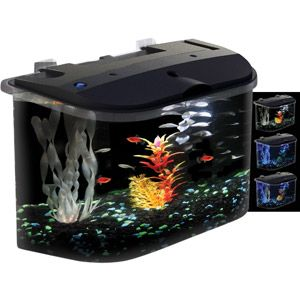 Koller craft glofish 5 gal aquarium kit with led lighting for How much does a betta fish cost