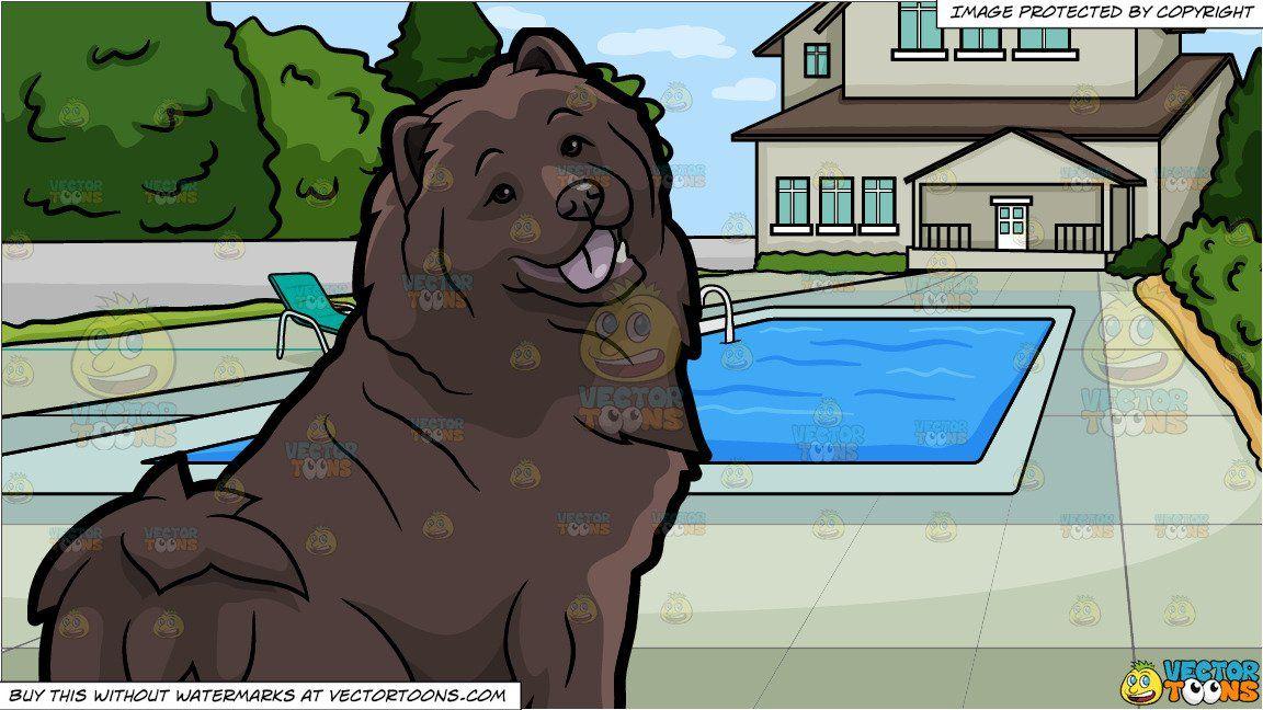 A Pretty Chocolate Brown Chow Chow Dog And A Backyard Pool