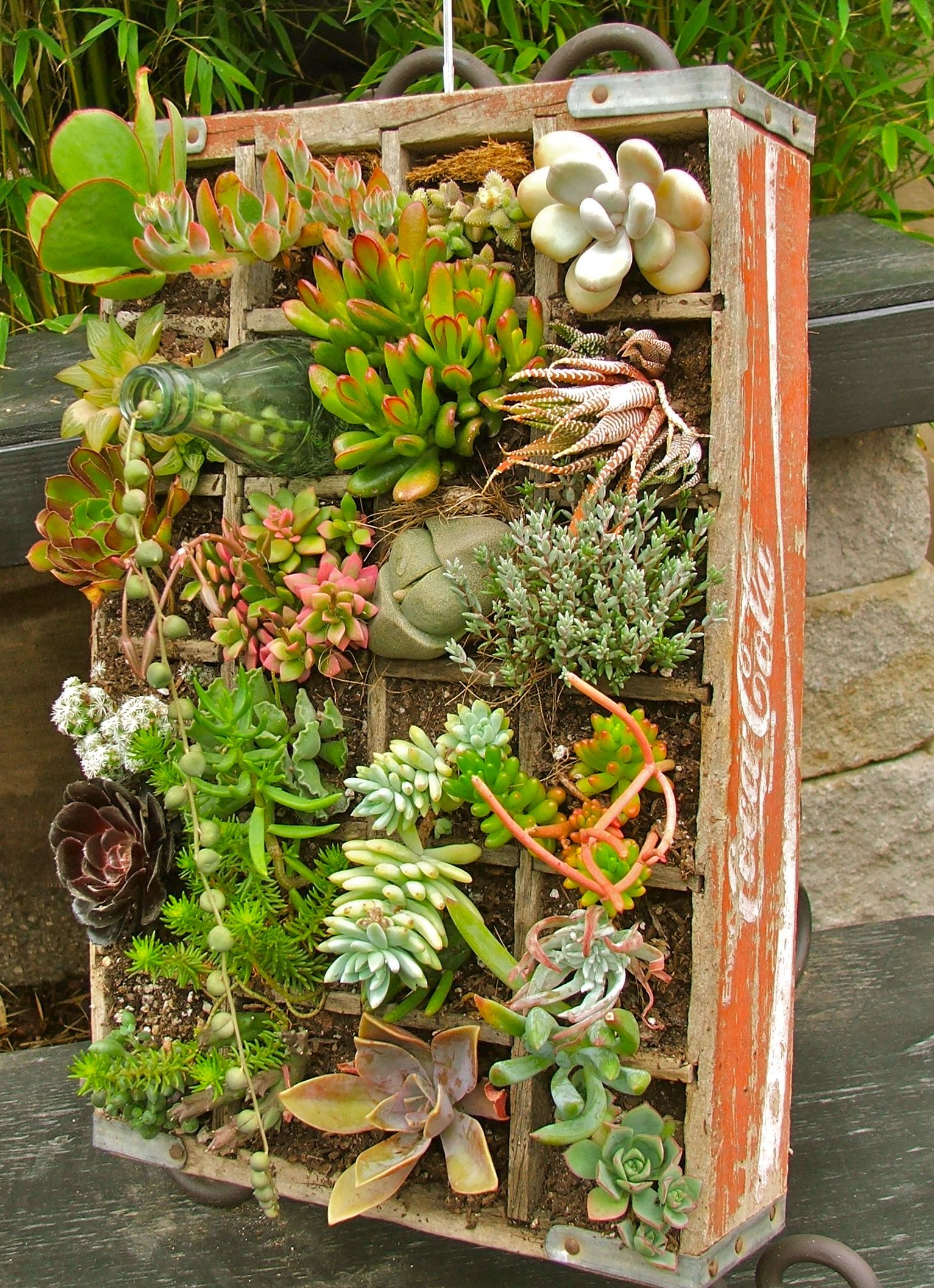1000 Images About DIY Succulent Landscaping Amp Design On Pinterest