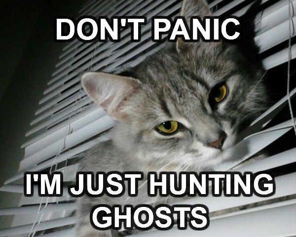 Ghosts Hunter Cat. HAHA