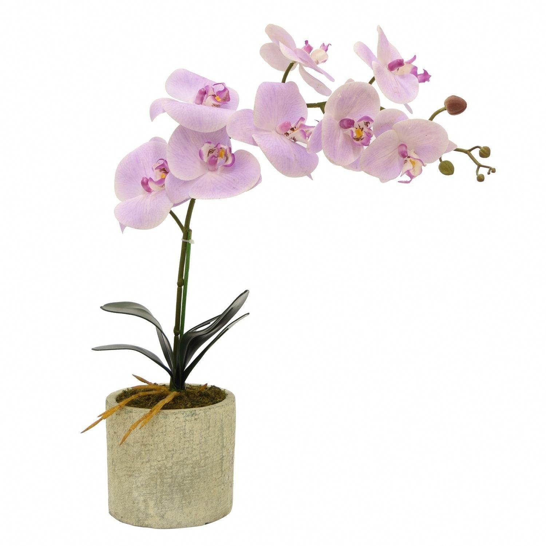 Orchids Tesco Orchids Flower Pots Orchid Arrangements Orchid Flower
