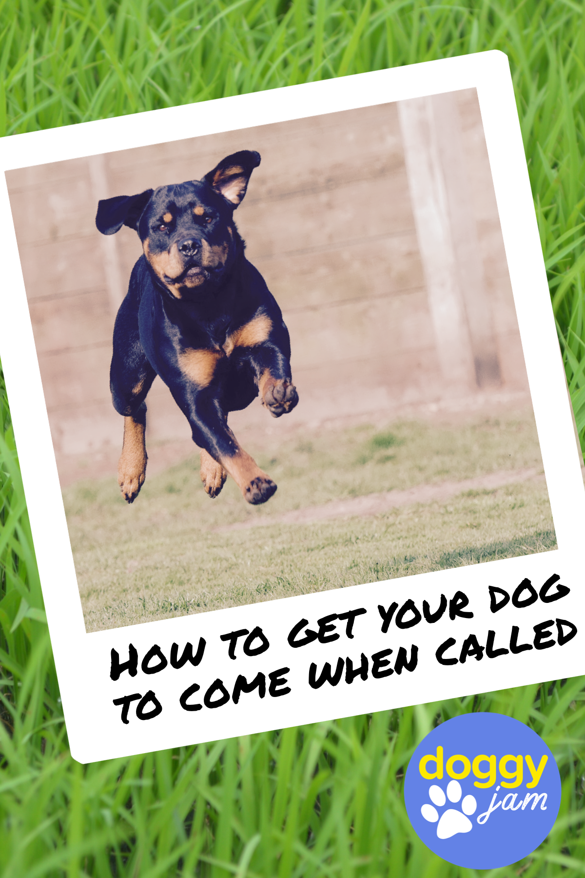 How To Teach Your Dog To Come No Matter What Dog Training Obedience Dog Training Dog Training Tips
