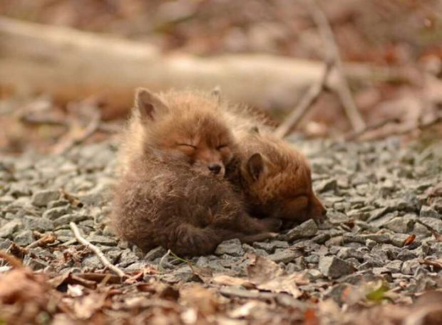 Father and Daughter Capture Truly Magical Photos of Baby Foxes in Their Backyard