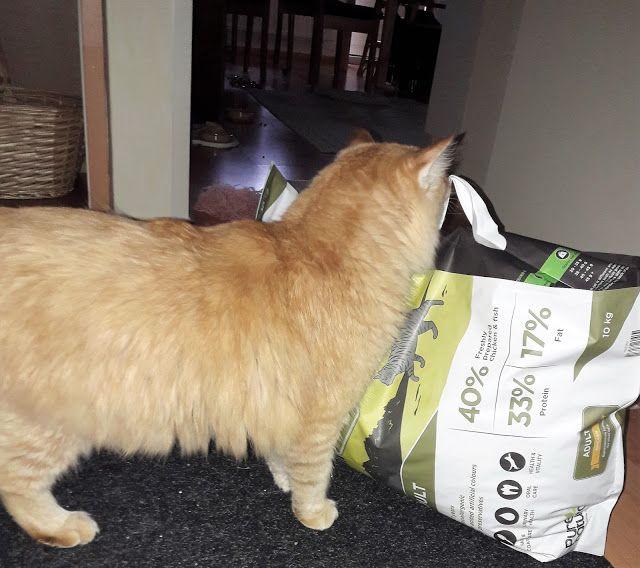 Luonnollisesti hyvää ja hoivaavaa kissoille