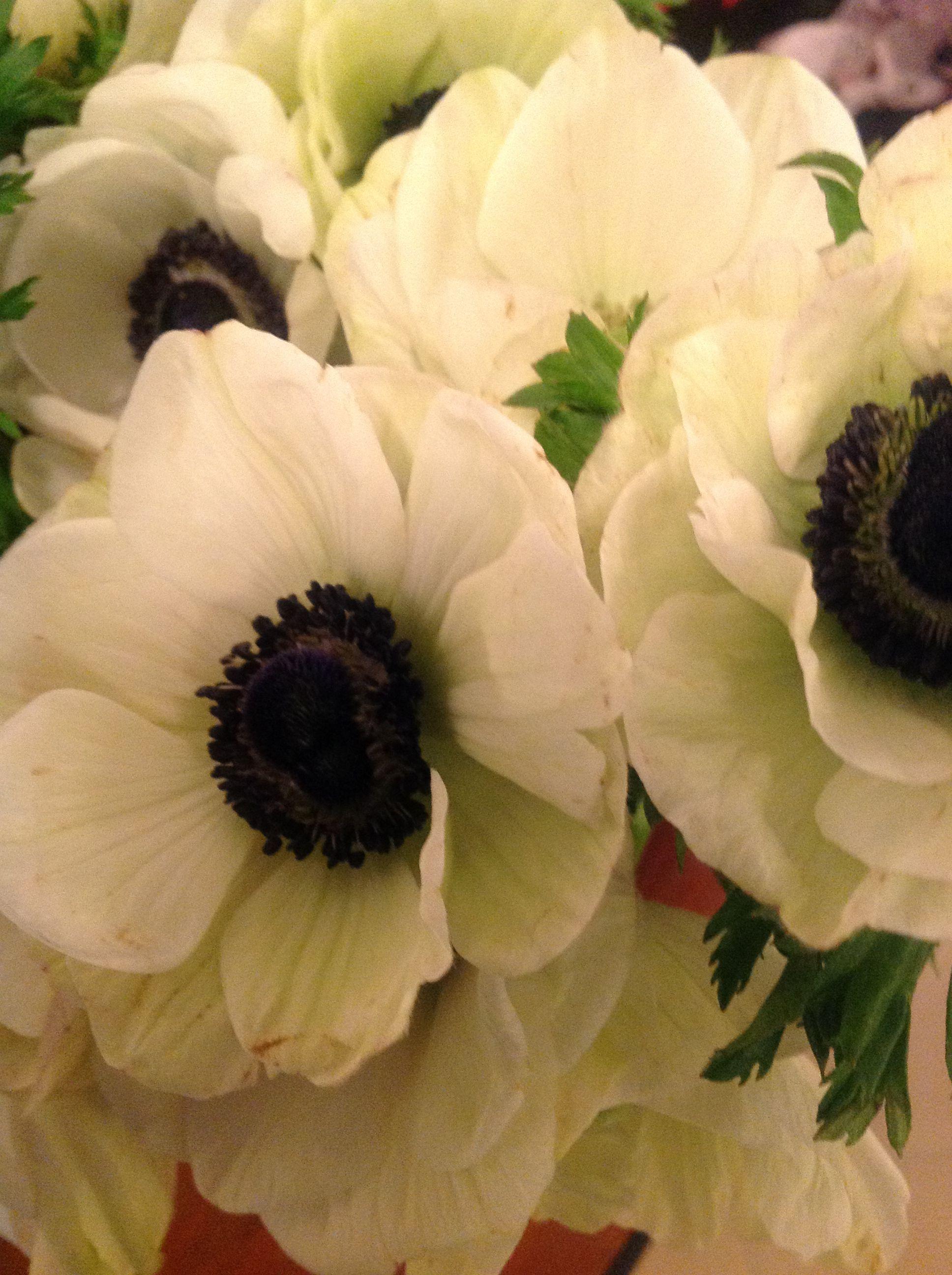 Anemones photo by kimm birkicht anemone flower power