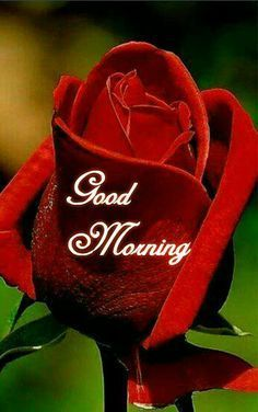Good Morning Quotes In Punjabi In 2020 Good Morning Roses Good Morning Images Flowers Morning Pictures
