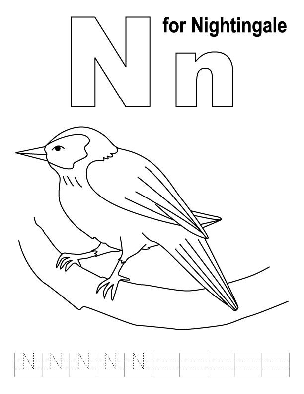 Letter N / Nightingale   Animal Coloring Page