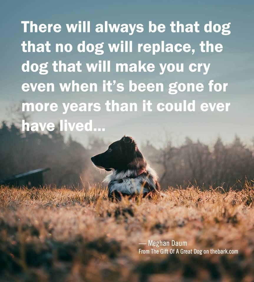 269c6e976666d098074bd2891273e840 - How Long Does It Take To Get Over A Loss Of A Pet