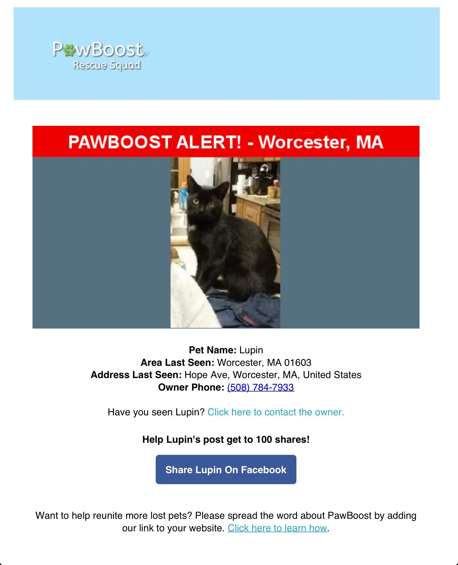 Lost Cat Named Lupin Worcester Ma Lost Cat Pet Names Cat Names