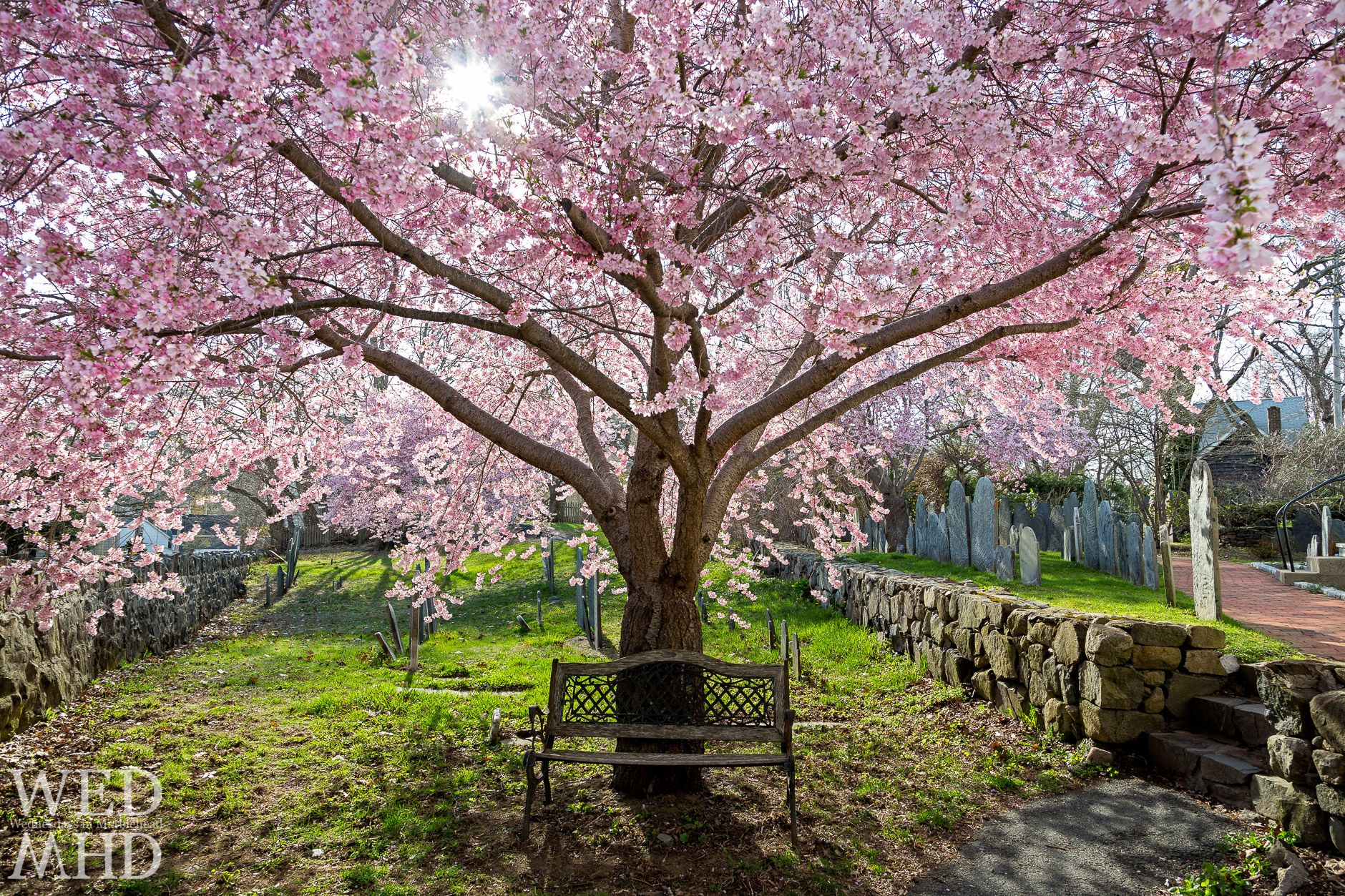 Best Of 2014 Countdown Continues Marblehead Ma Flowering Trees Marblehead Dogwood Trees